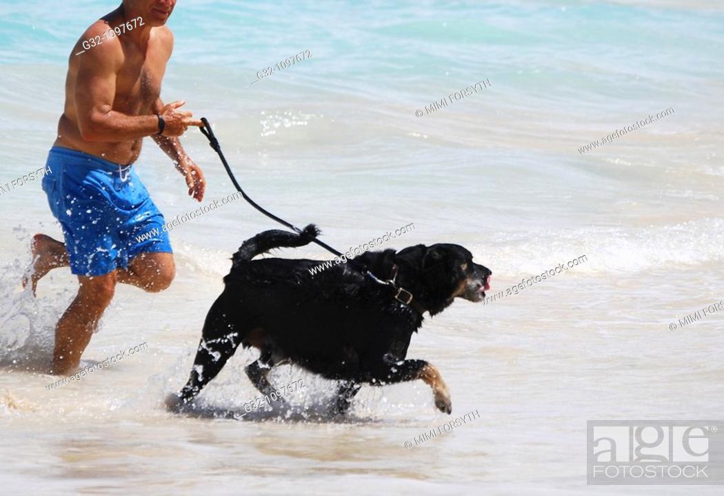 Stock Photo: Dog runs in surf.