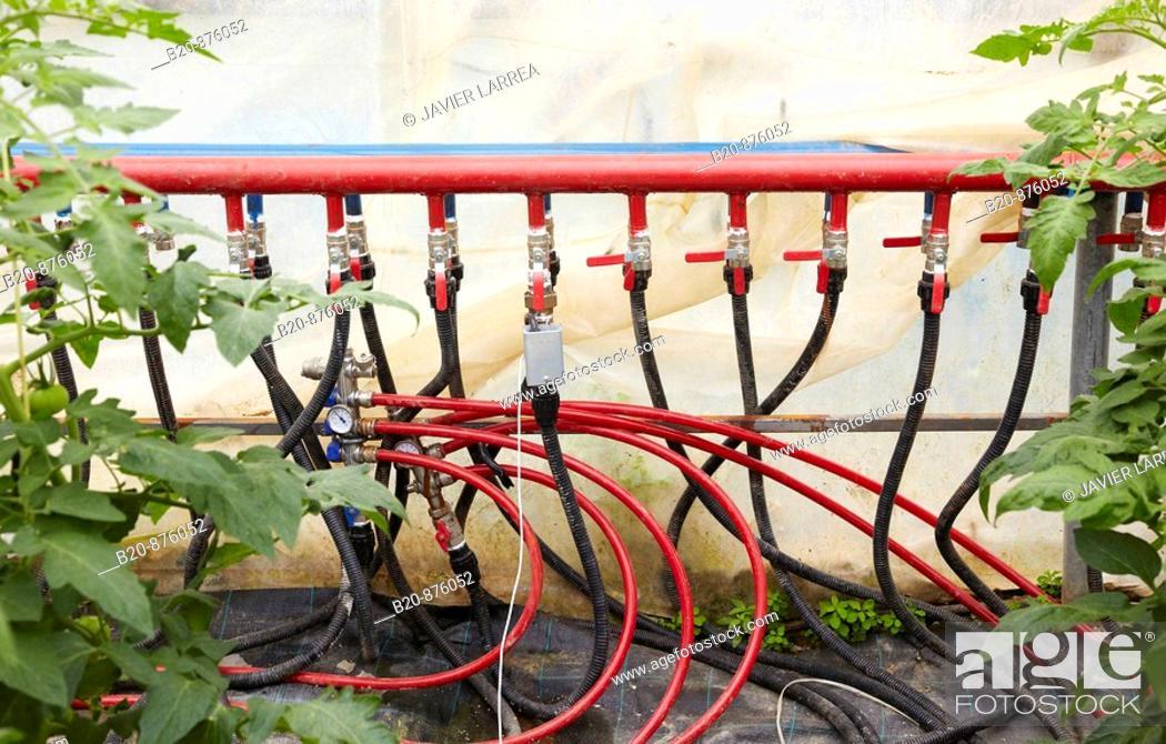 Stock Photo: Watering systems, tomato plants in greenhouse, Nuarbe, Azpeitia, Gipuzkoa, Basque Country, Spain.