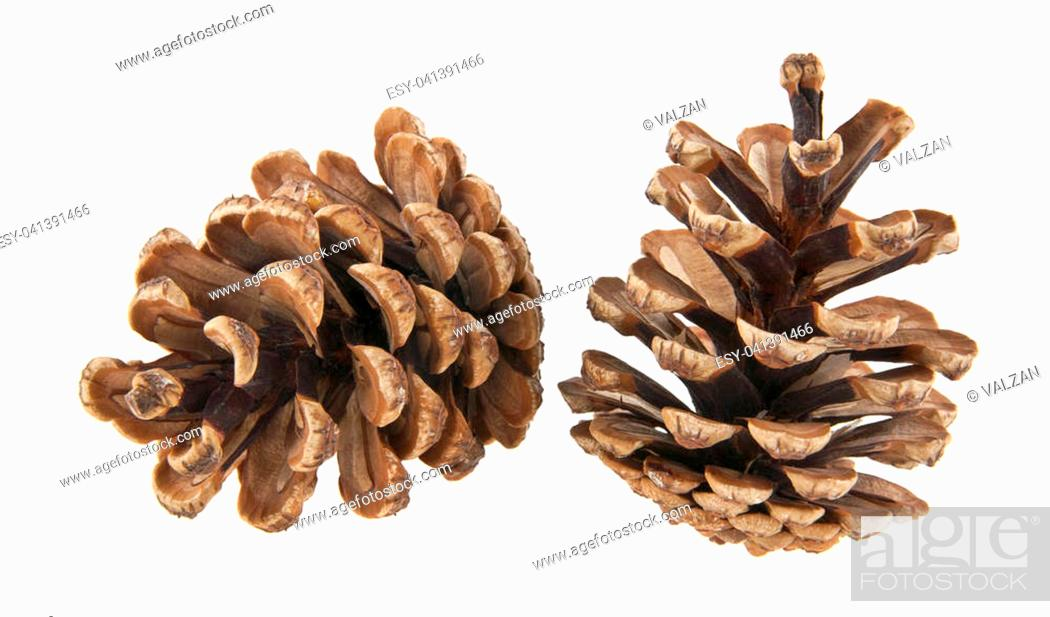 Stock Photo: cones isolated on white background closeup.