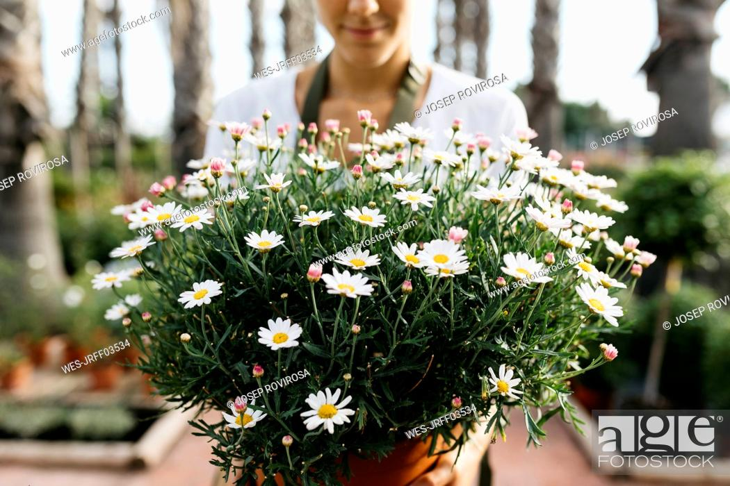 Imagen: Female worker in a garden center holding a daisy plant.