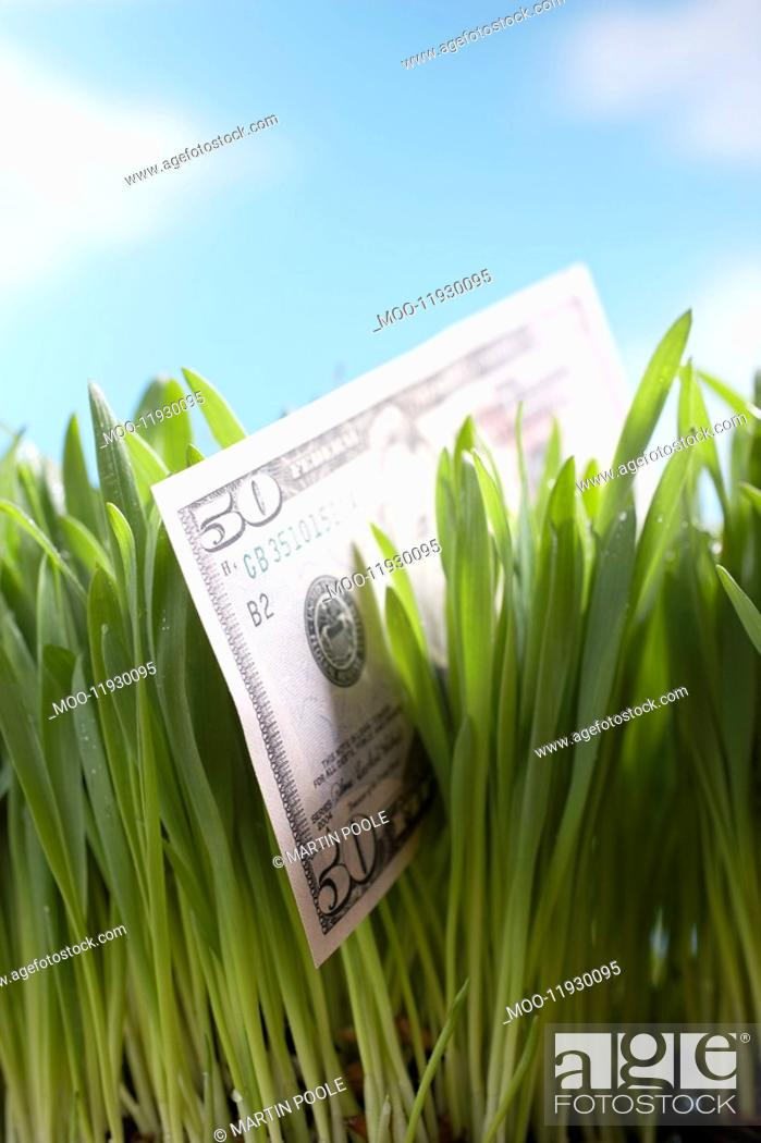 Stock Photo: Fifty-dollar bill in grass close-up.