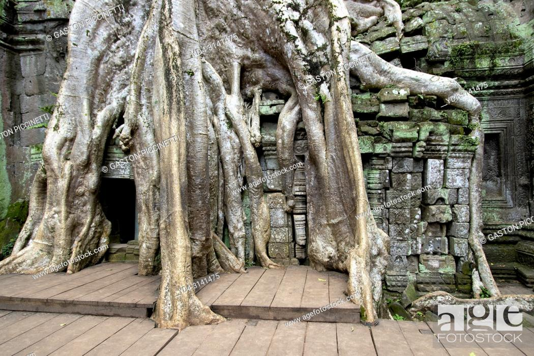 Stock Photo: Tree roots cover much of the ruins of Ta Prohm temple in Angkor Wat, Siem Reap, Cambodia. Ta Prohm is the modern name of the temple at Angkor.
