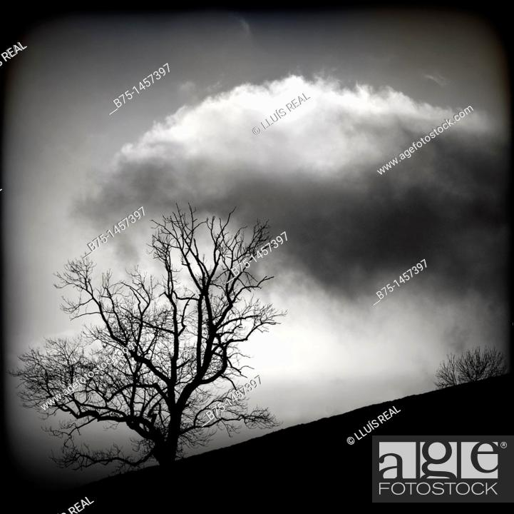 Stock Photo: Blach and white countryside clouds and tree,.