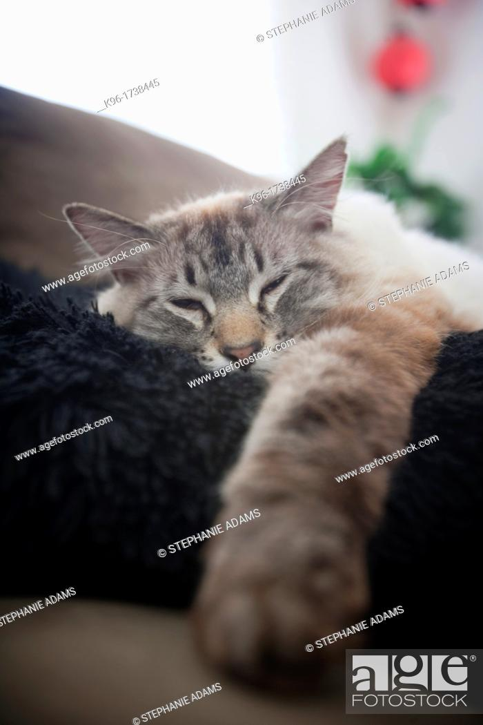 Stock Photo: cat contentedly sleeping on a pillow.