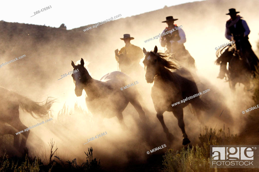Stock Photo: Cattlemen with 'Quarter horse' and/or 'Paint' of USA. Ponderosa Ranch. Seneca. Oregon . USA.