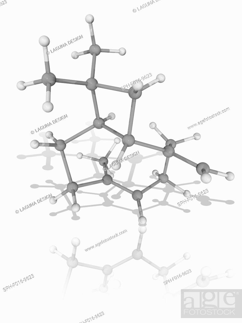 Caryophyllene Molecular Model Of The Sesquiterpene Caryophyllene