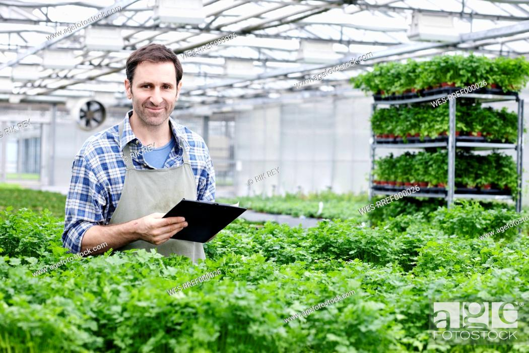 Stock Photo: Germany, Bavaria, Munich, Mature man in greenhouse between parlsey plants with clip board.