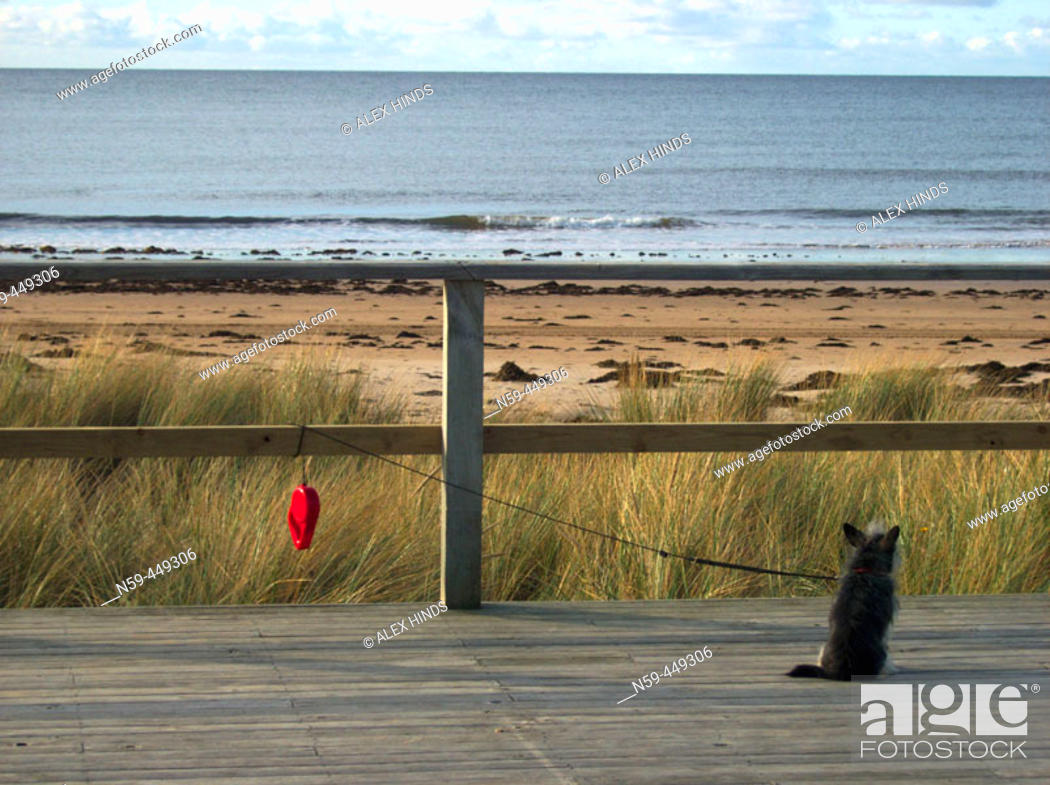 Stock Photo: Dog, beach.