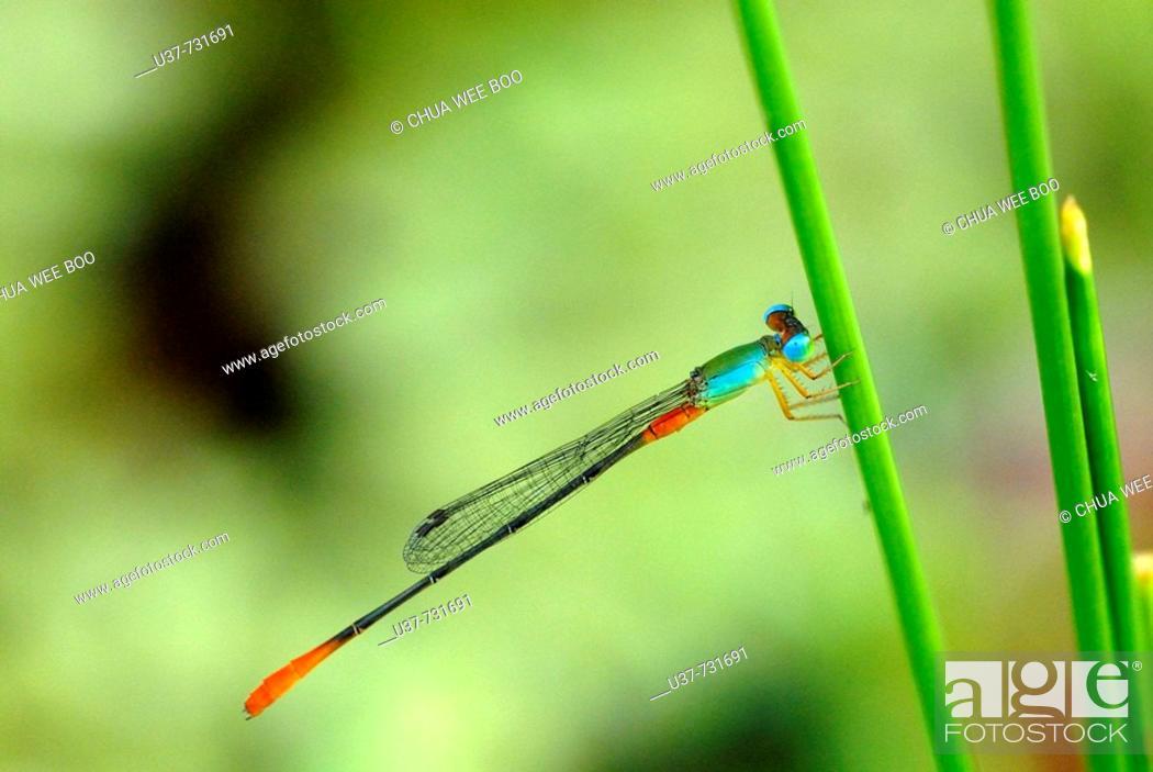 Stock Photo: New born dragonfly.
