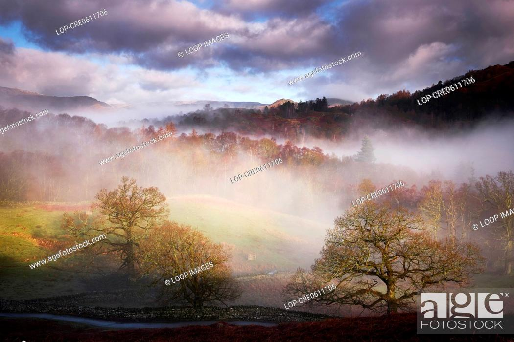 Stock Photo: Misty trees in the early morning above Rydal Water in the Lake District.