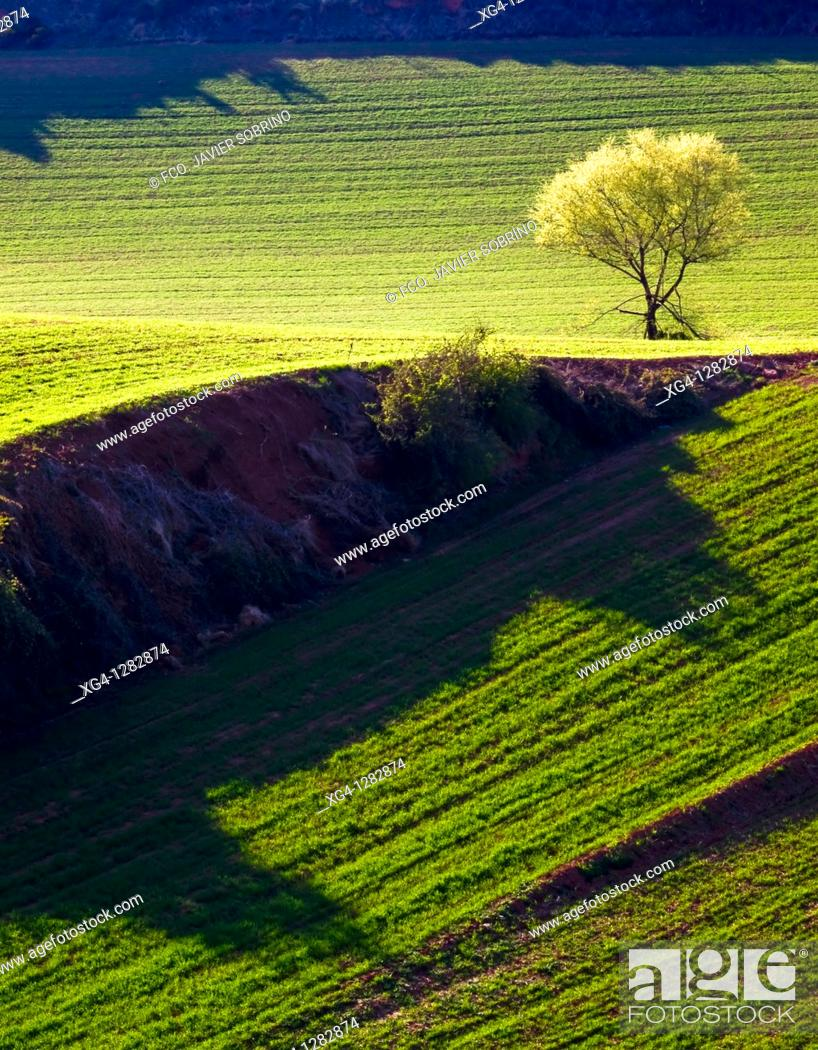 Stock Photo: Spring wheat fields around Berceo - Rioja Alta - La Rioja - Spain.