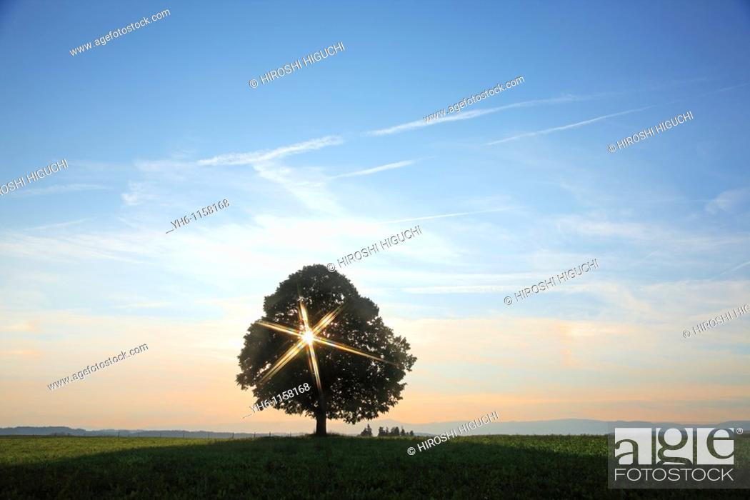 Stock Photo: Single tree with sunbeam, Switzerland, Canton Lucerne, Emmental.