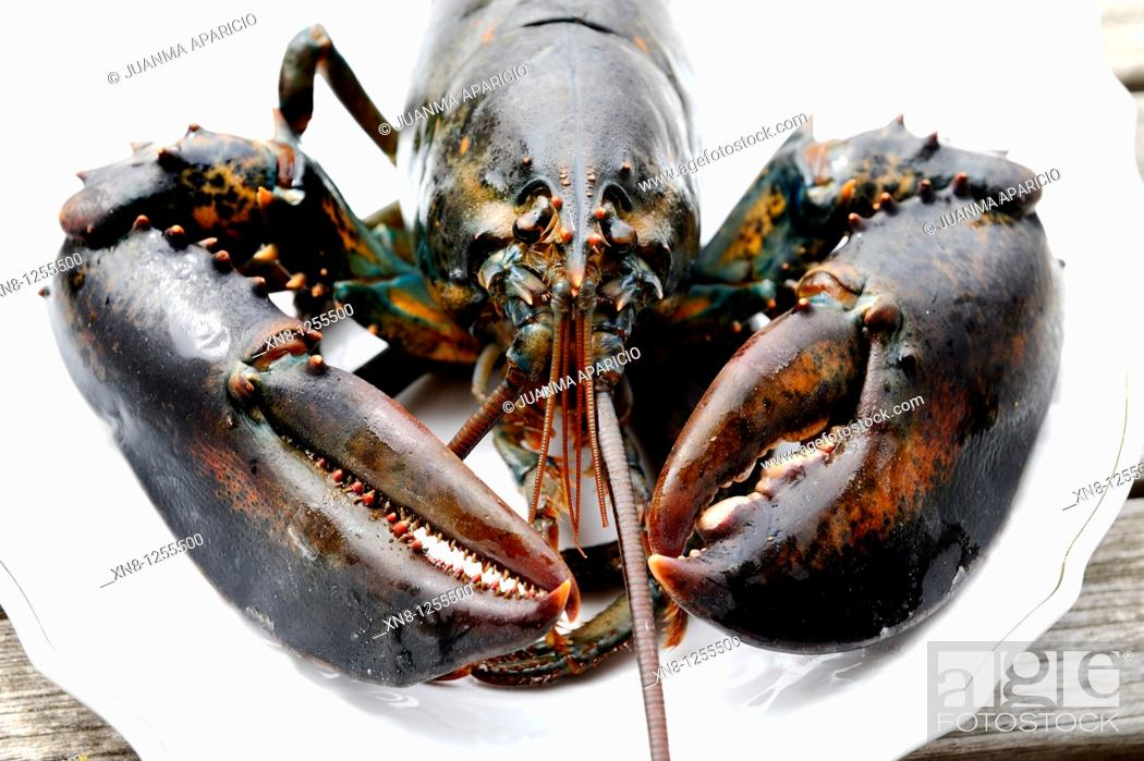 Stock Photo: Lobster (Homarus gammarus), ready for cooking.