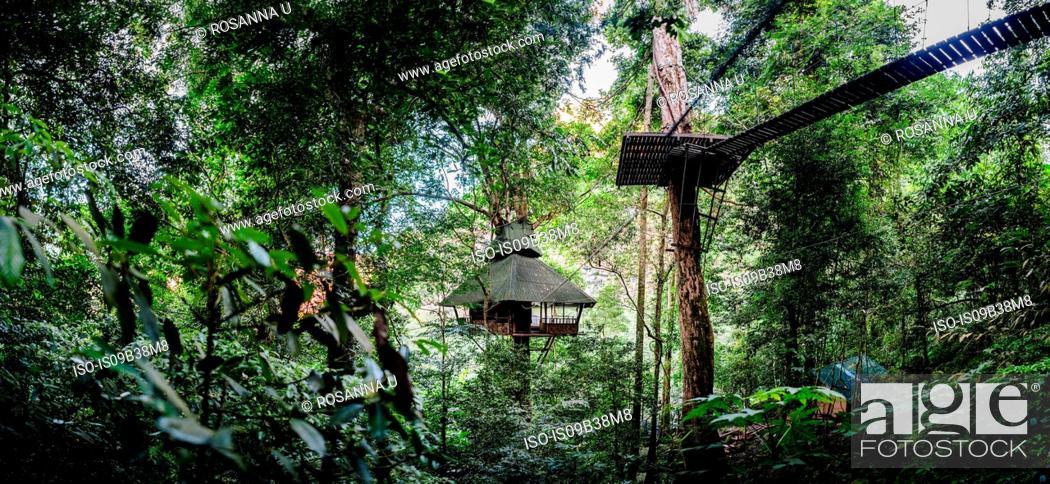 Stock Photo: Treehouse, Ban Nongluang National Park, Champassak province, Paksong, Laos.