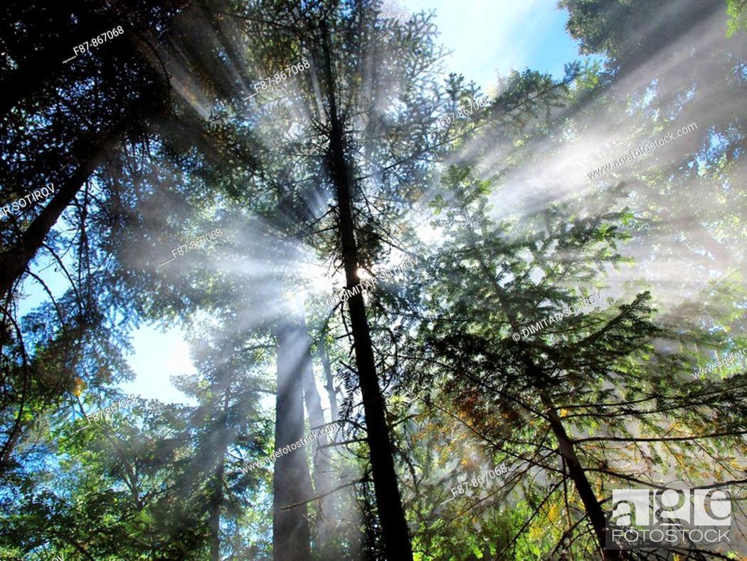 Stock Photo: Forest near Rila Monastery, Bulgaria, Europe.