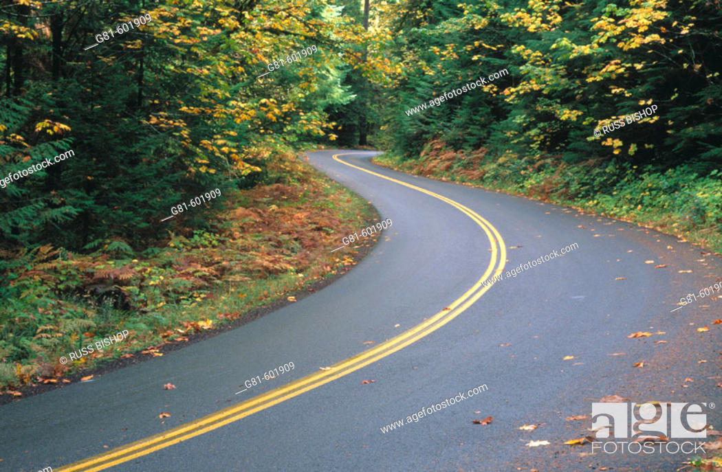 Stock Photo: Fall color along McKenzie highway. Willamette National Forest. Oregon. USA.