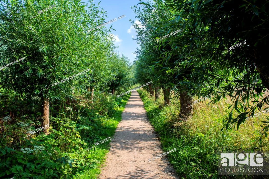 Stock Photo: Barendrecht, Netherlands. Hiking path through a natural osier, bordering the river Nieuwe Maas, south of Rotterdam.