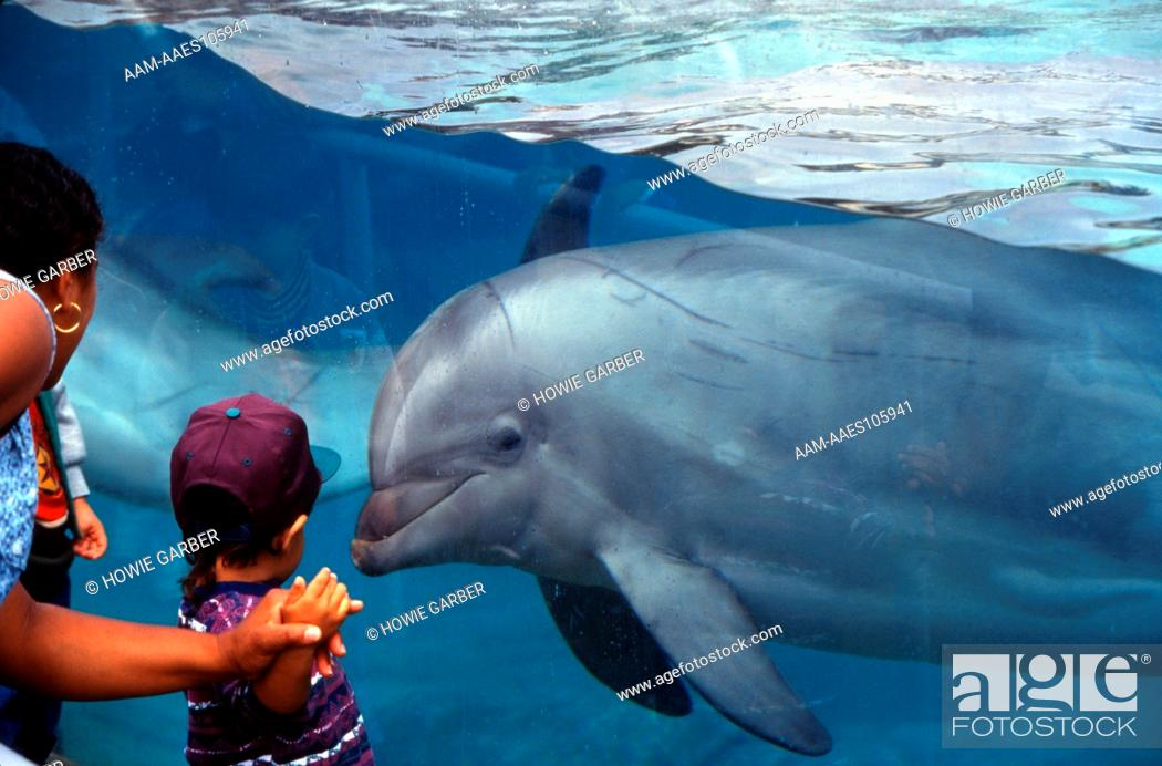Dolphin in Aquarium, A Childs Wonder, Sea World San Diego