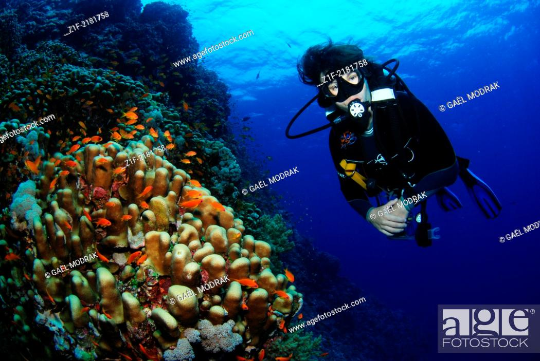 Stock Photo: Diver on Rocky Islands, middle of red Sea, Egypt. Favia stelligera and Pseudanthias squamipinnis.