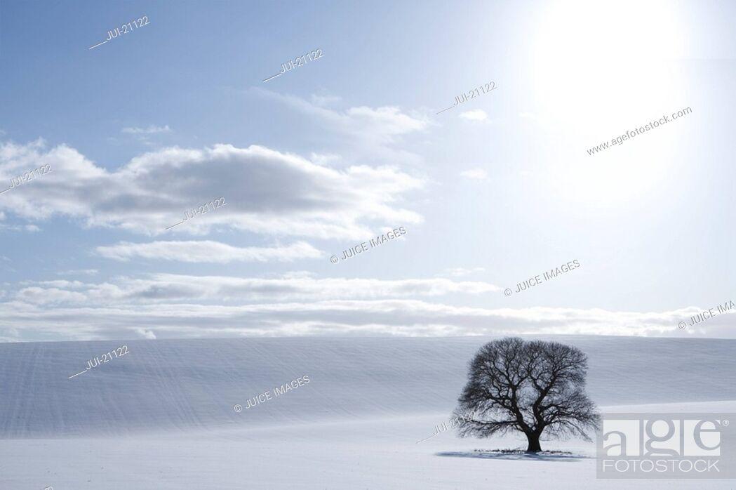 Stock Photo: Tree in snowy field.