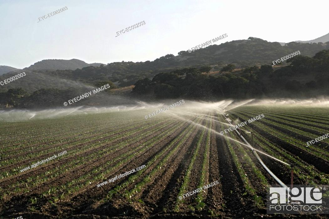 Stock Photo: View of sprinklers on an agriculture land.