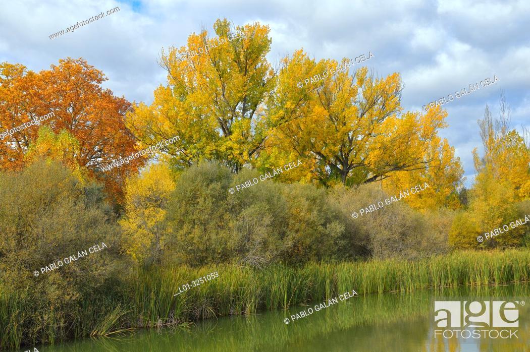Imagen: Riparian vegetation in Parque regional río Manzanares. El Pardo, Madrid Province, Spain.