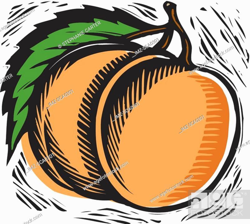 Stock Photo: fresh peach.