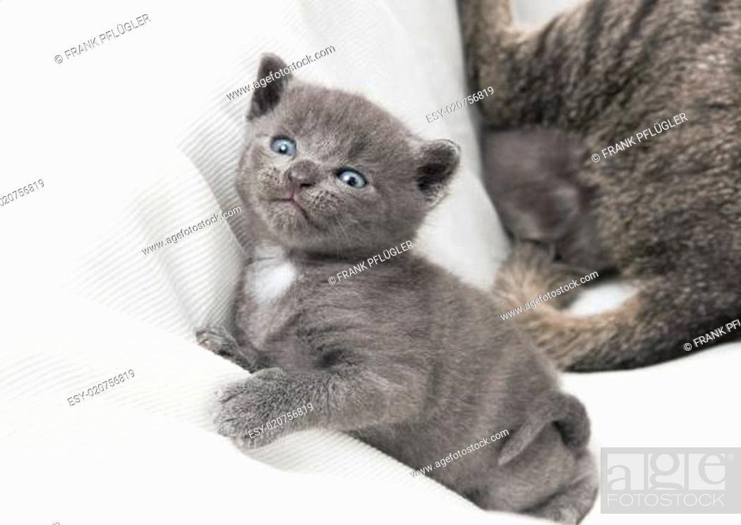 Stock Photo: kitten looks upwards.