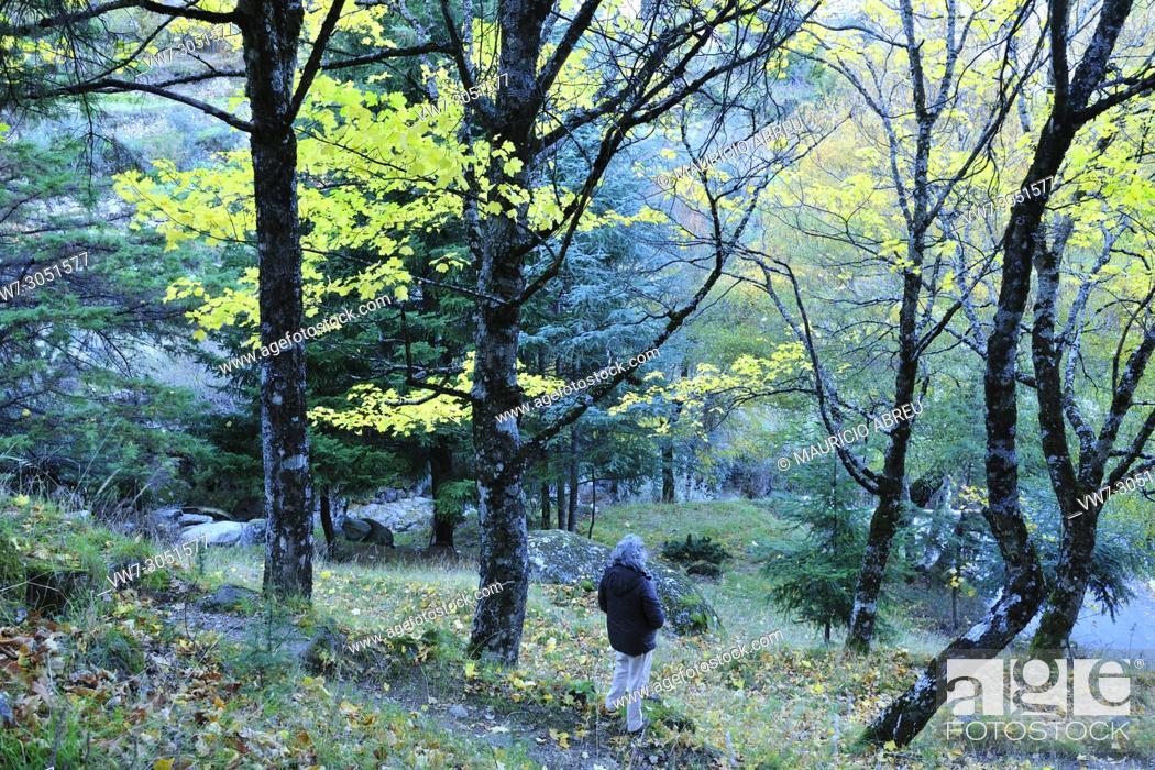 Imagen: Autumn time in the Serra da Estrela Nature Park, Portugal.