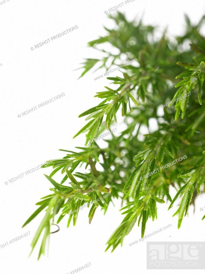 Stock Photo: Raw Food, Herbs, Rosemary.
