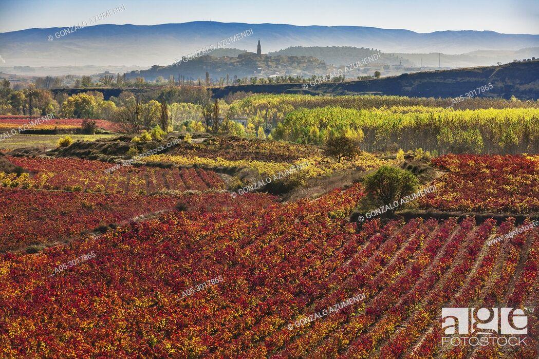 Stock Photo: Vineyards in autum around Labastida in Rioja alavesa. In the background Briones village. La Rioja. Spain.