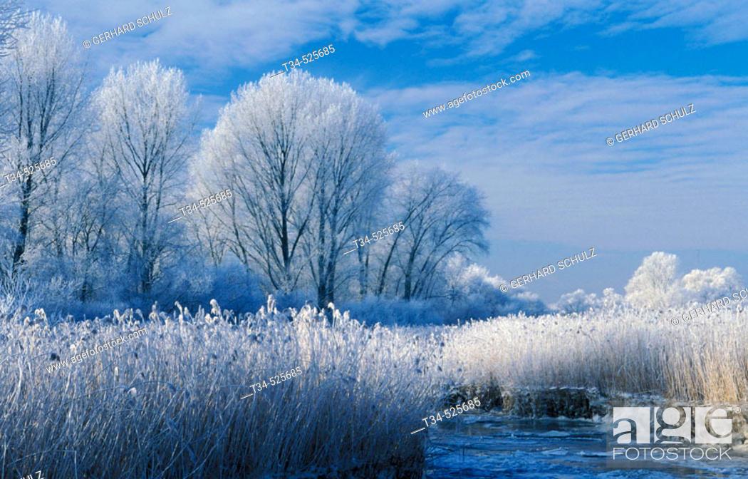 Stock Photo: Winter Scenery. Trees. Mecklenburg-Vorpommern, Germany.