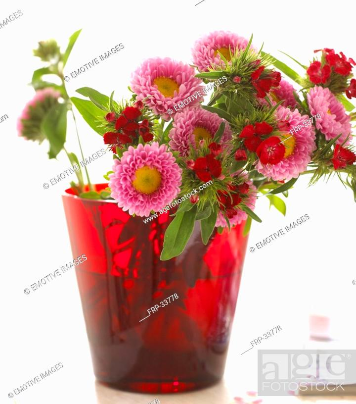 Stock Photo: Bouquet of asters.