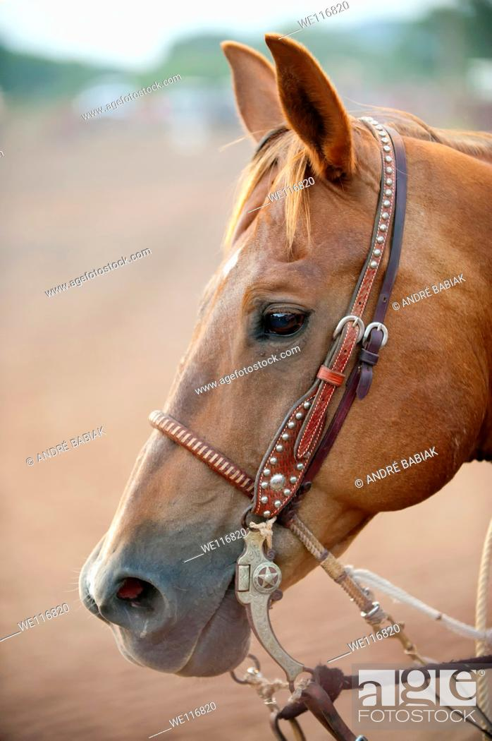 Stock Photo: Horse head with bridle and reins.