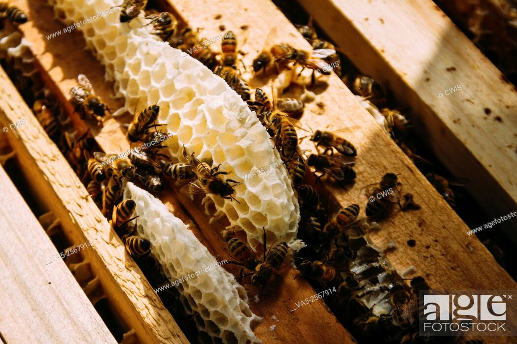 Imagen: Taiyuan, Shanxi province, China - The view of many bees in bee hive.