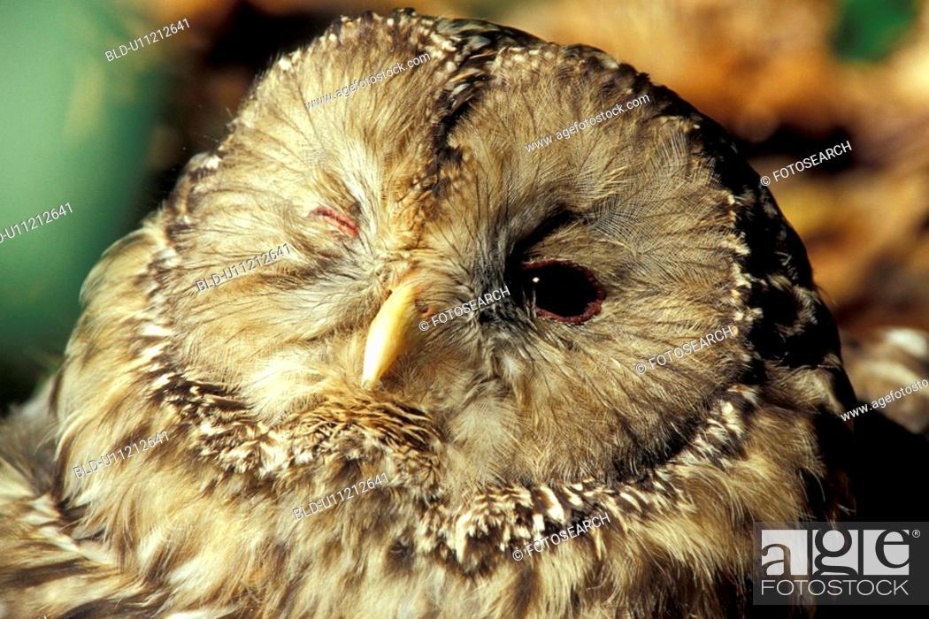 Stock Photo: Owl.