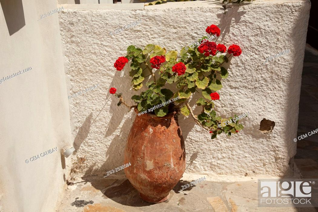 Stock Photo: Geranium flowers in a pot, Naxos, Cyclades Islands, Greek Islands, Greece, Europe.
