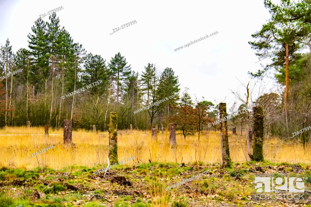 Photo de stock: Chopped wood in the forest, The Netherlands, Europe.