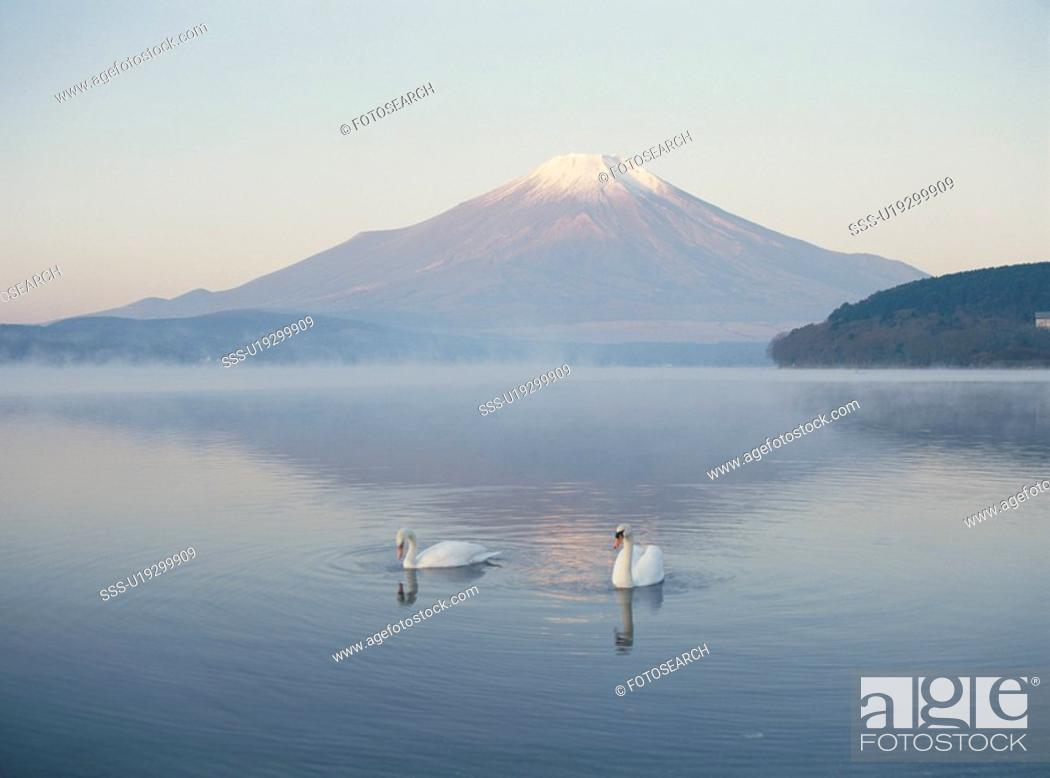Stock Photo: A Swan And Mt. Fuji In Yamanashi Prefecture.