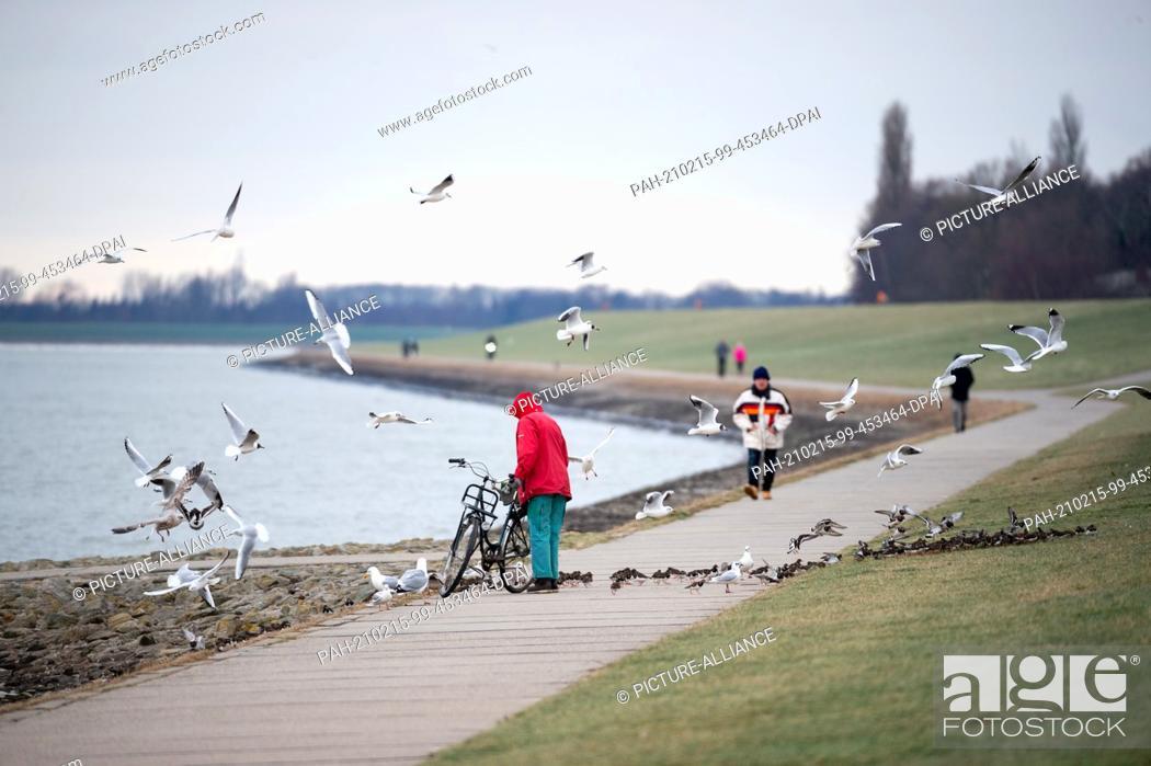 Stock Photo: 10 February 2021, Lower Saxony, Wilhelmshaven: Laughing gulls (Chroicocephalus ridibundus) and turnstones (Arenaria interpres) flutter and run around a woman on.