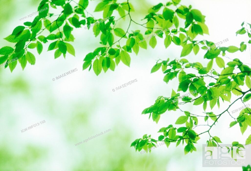 Stock Photo: Close-up of green leaves.