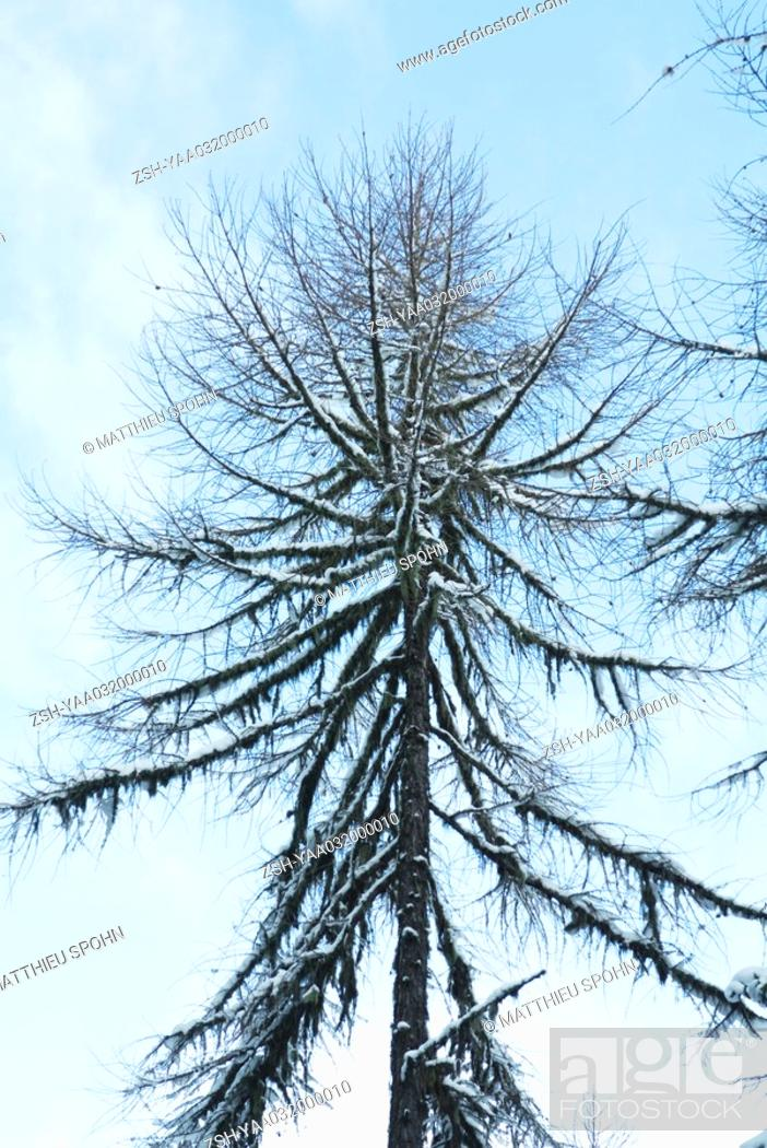 Stock Photo: Snow-covered tree, low angle view.