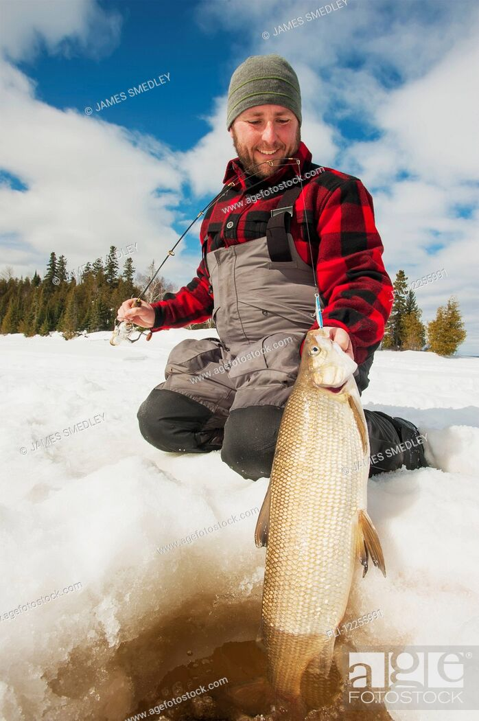 Stock Photo: Ice fisherman holding a large whitefish ready to release back into the hole; Ontario, Canada.