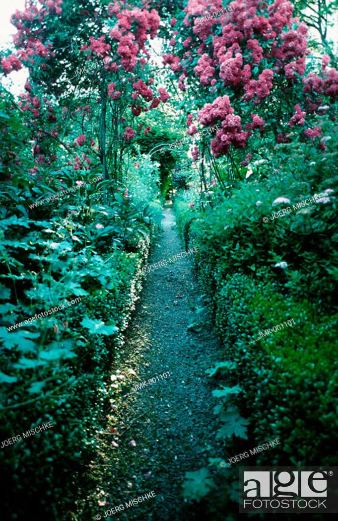Stock Photo: A path through a blooming garden, pink roses.
