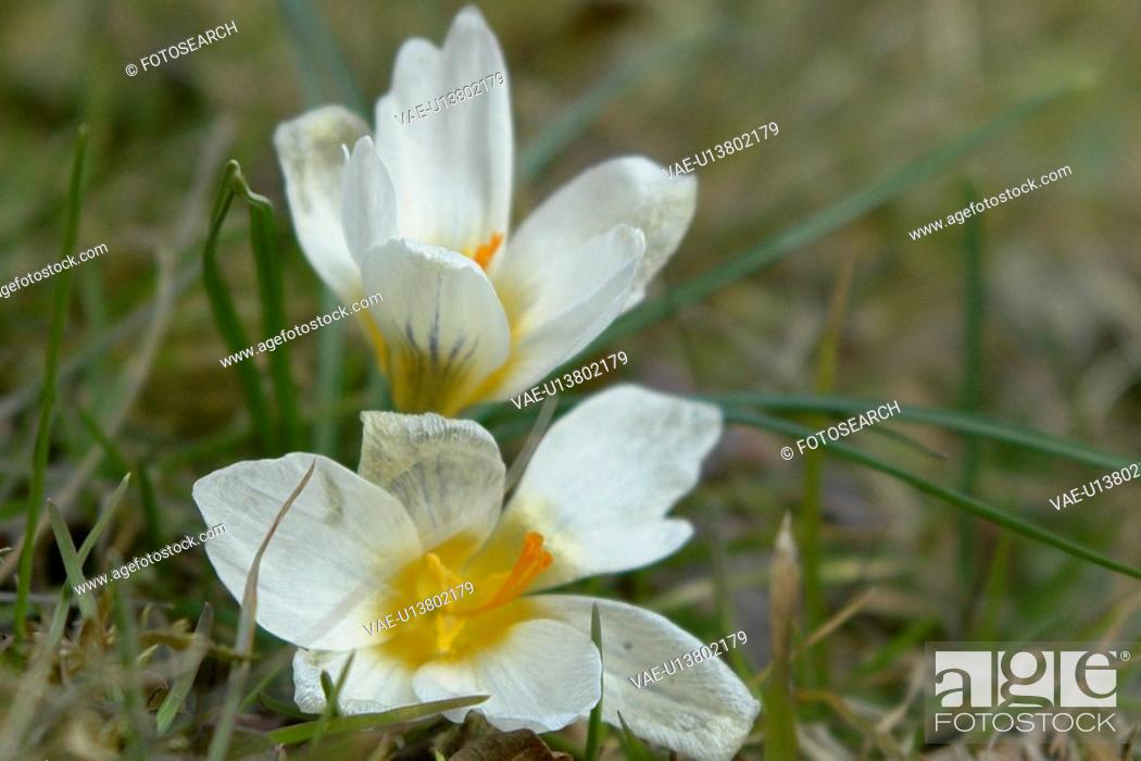 Stock Photo: wiesen, felder, berne, blooms, blumenrfarben, botany, colored.