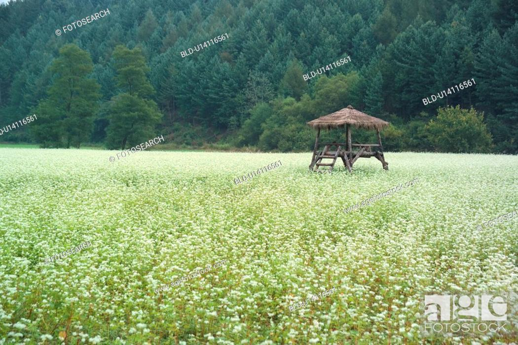 Stock Photo: plants, landscape, plant, thatched hut, mountain, scenery.
