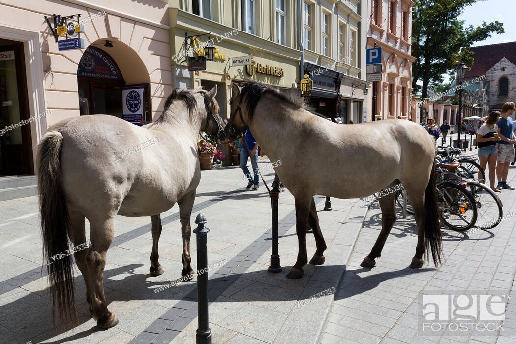 Stock Photo: Horses in the streets in Krakow, old historical city in Poland, Europe.