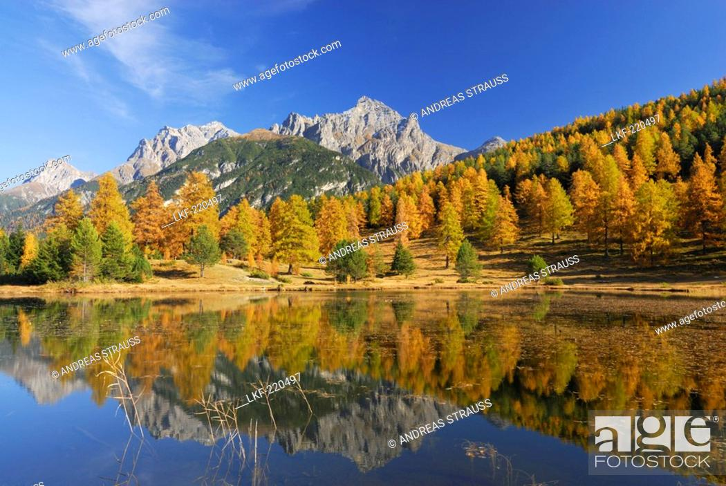Imagen: Larches in autumn colours with view to Piz Lischana and Piz San Jon and reflections in mountain lake, Unterengadin, Engadin, Grisons, Switzerland.