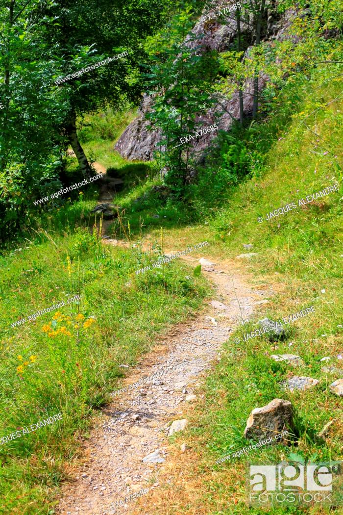 Imagen: Path at spring time in the Pyrenees, France.