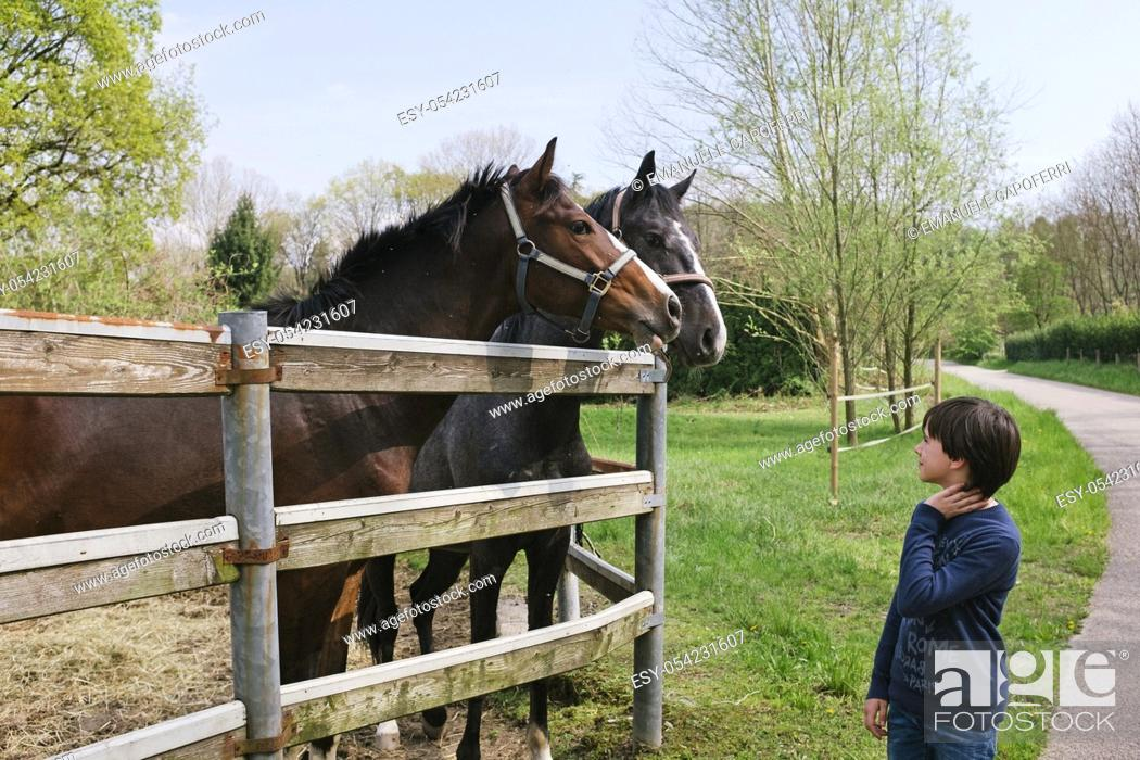 Stock Photo: Boy of 11 years looks at the horses behind a fence.